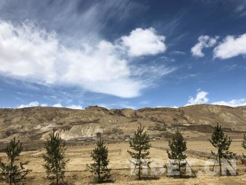 图为海拔3900米以上的阿里普兰县公路两边的绿化建设。摄影:噶哇扎西