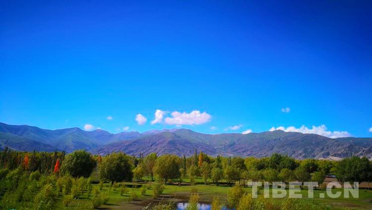 近40年4500万棵树 西藏山南用绿